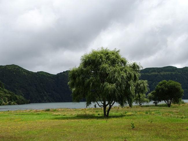 Lake Landscape Idyllic Tranquility Tranquil Scene Tree Storm Cloud Mountain Dramatic Sky Sky Landscape Grass Cloud - Sky