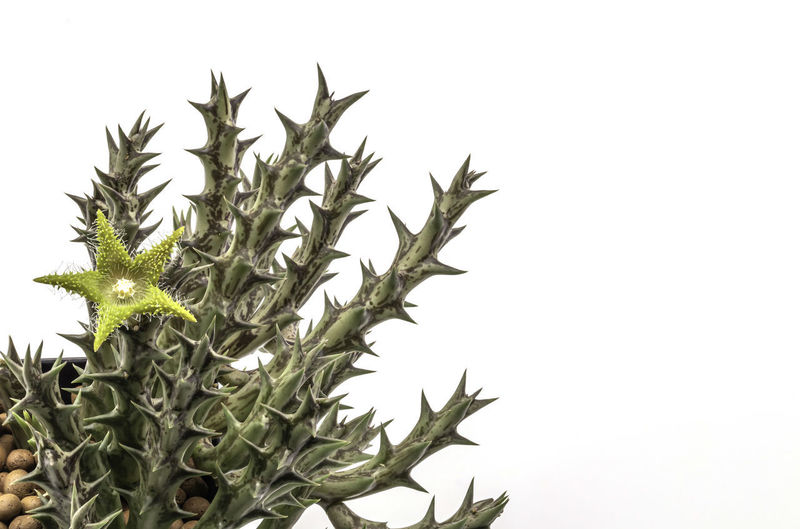 Close-up of plant against white background