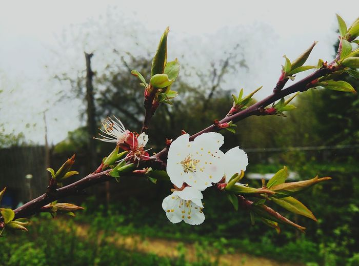 Весна💐🌷🌿 Flower Hi! люблюфотографировать Курскаяобласть отдых 😊✌️ прелесть💋💕💕💕 природа🍃 Taking Photos That's Me цветы🌸🌼🌻💐🌾🌿 день Курскfoto