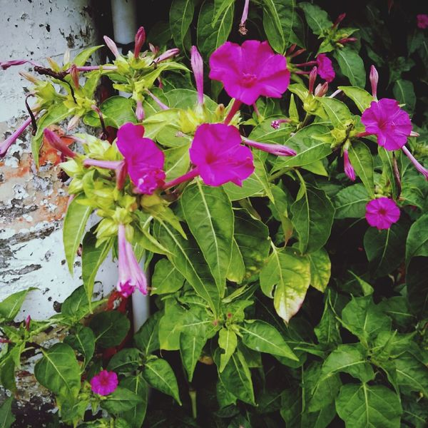 Nature Plant Flower Pink Color Freshness