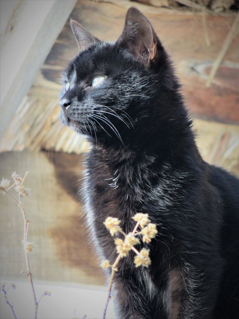 one animal, animal themes, domestic cat, pets, domestic animals, mammal, feline, whisker, no people, day, indoors, close-up, nature
