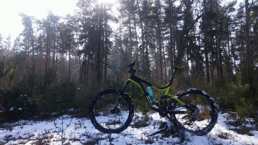 Winter forest freeriding MTB Freeride Fun EyeEmNewHere Nature Forest Sunnyday Sun Trees Giantbikes Giantreign Giantbicycle Czech Republic Reign2017 Tree Cold Temperature Sky Bicycle Riding