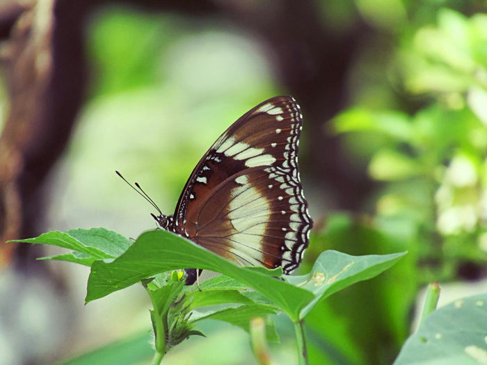 Butterfly perching on leaf