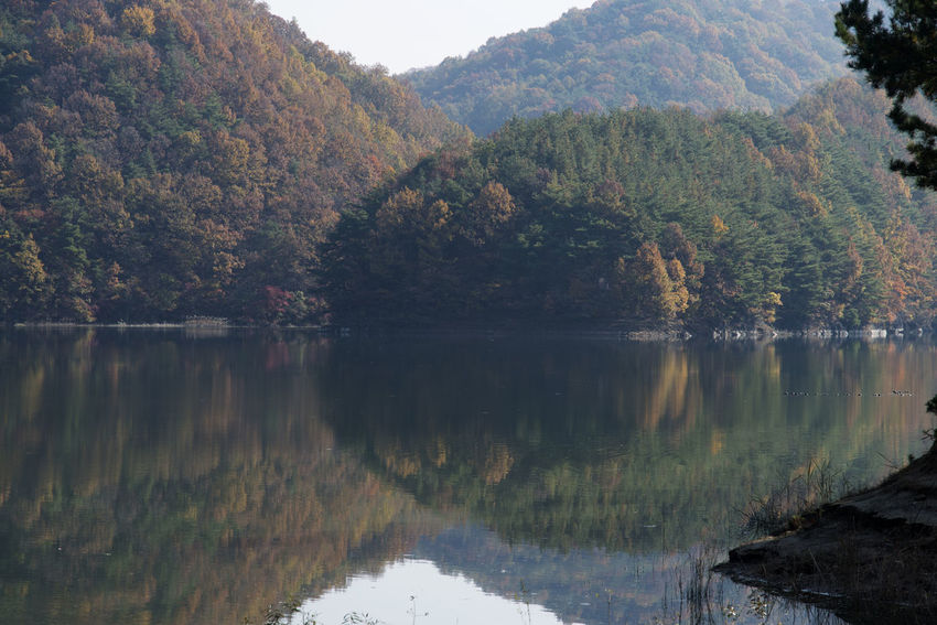 autumn landscape of Busodamak, a beautiful lake located in Okcheon, Chungbuk, South Korea Autumn Autumn Lake Beauty In Nature Day Growth Lake Lake In Autumn Lake In The Morning Lake Reflection Morning Lake Mountain Nature No People Outdoors Reflection Scenics Sky Tranquil Scene Tranquility Tree Water