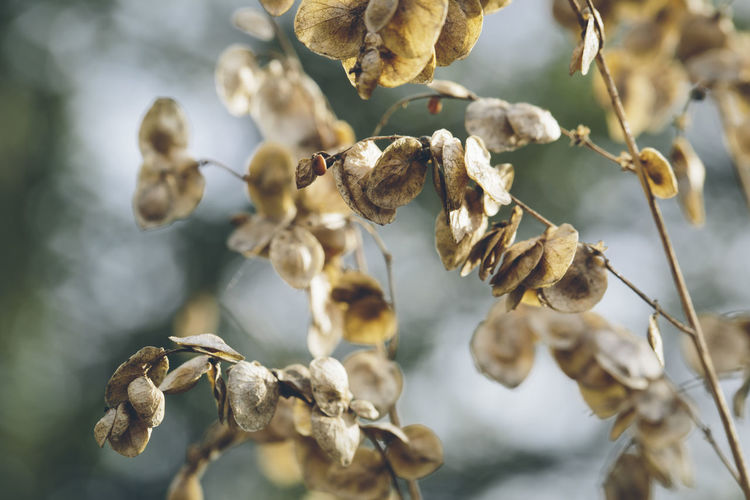 Close-Up Of Dry Flowers On Branch