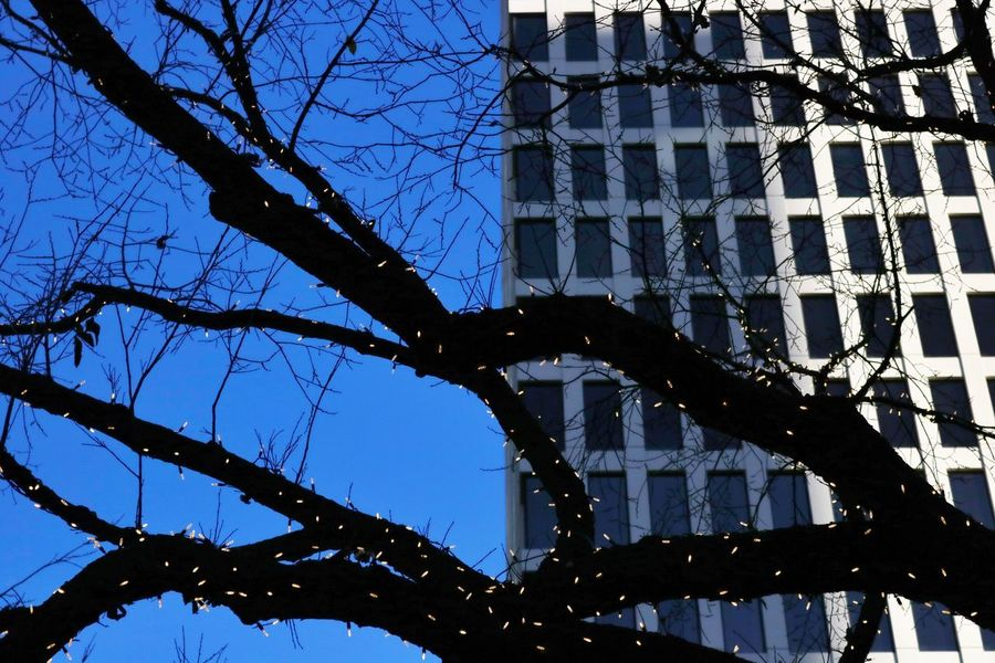 Capture Tomorrow Tree Bare Tree Low Angle View Branch No People Sky Nature Plant Built Structure Architecture Outdoors Day Silhouette Building Exterior Metal Clear Sky Connection Dusk Blue City