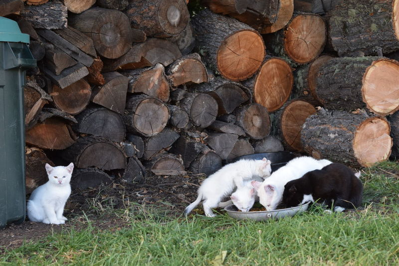 Animal Themes Cat Day Domestic Animals Feral Cat Field Grass Grassy Livestock Lying Down Mammal Nature No People Outdoors Relaxation Resting Rural Scene Wood Pile Young Animal