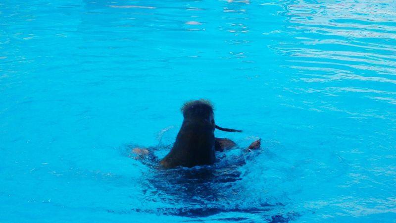 Бассейн лето атракцион отличное настроение животное