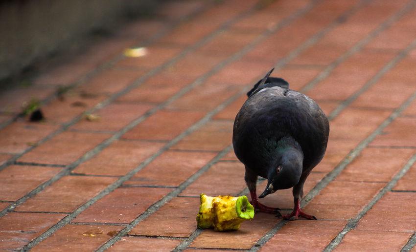 Miseria Bird City Perching Black Color