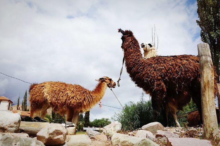 Argentina Animals