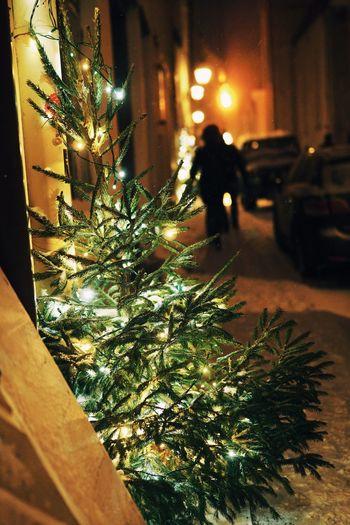 Transportation Illuminated Motor Vehicle Car Night City Street Architecture Land Vehicle christmas tree Christmas Tree Plant Christmas Decoration Celebration Outdoors Focus On Foreground