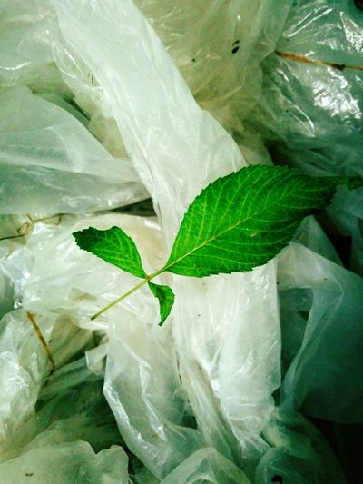 Leafs 🍃 Leaf Green Color Mobile Phone Photography No People Close-up Polythene