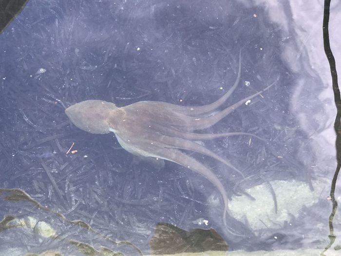 Octopus seen