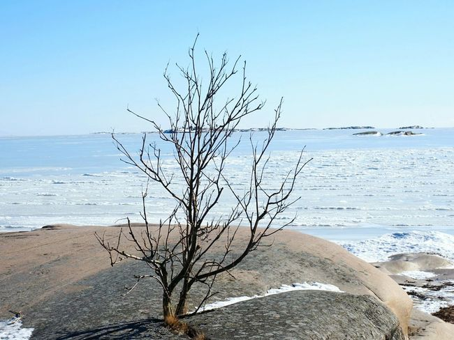 Winter Nature Outside Winter Walks On The Beach Winter Nature Enjoying The View Water Sea Clear Sky Beach Bare Tree Branch Sand Blue Tree Seascape Horizon Over Water Rocky Coastline Single Tree Shining Sun Sunrise Coastline Idyllic Ocean Coast Tranquil Scene Calm