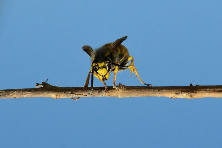 Low angle view of insect against blue sky