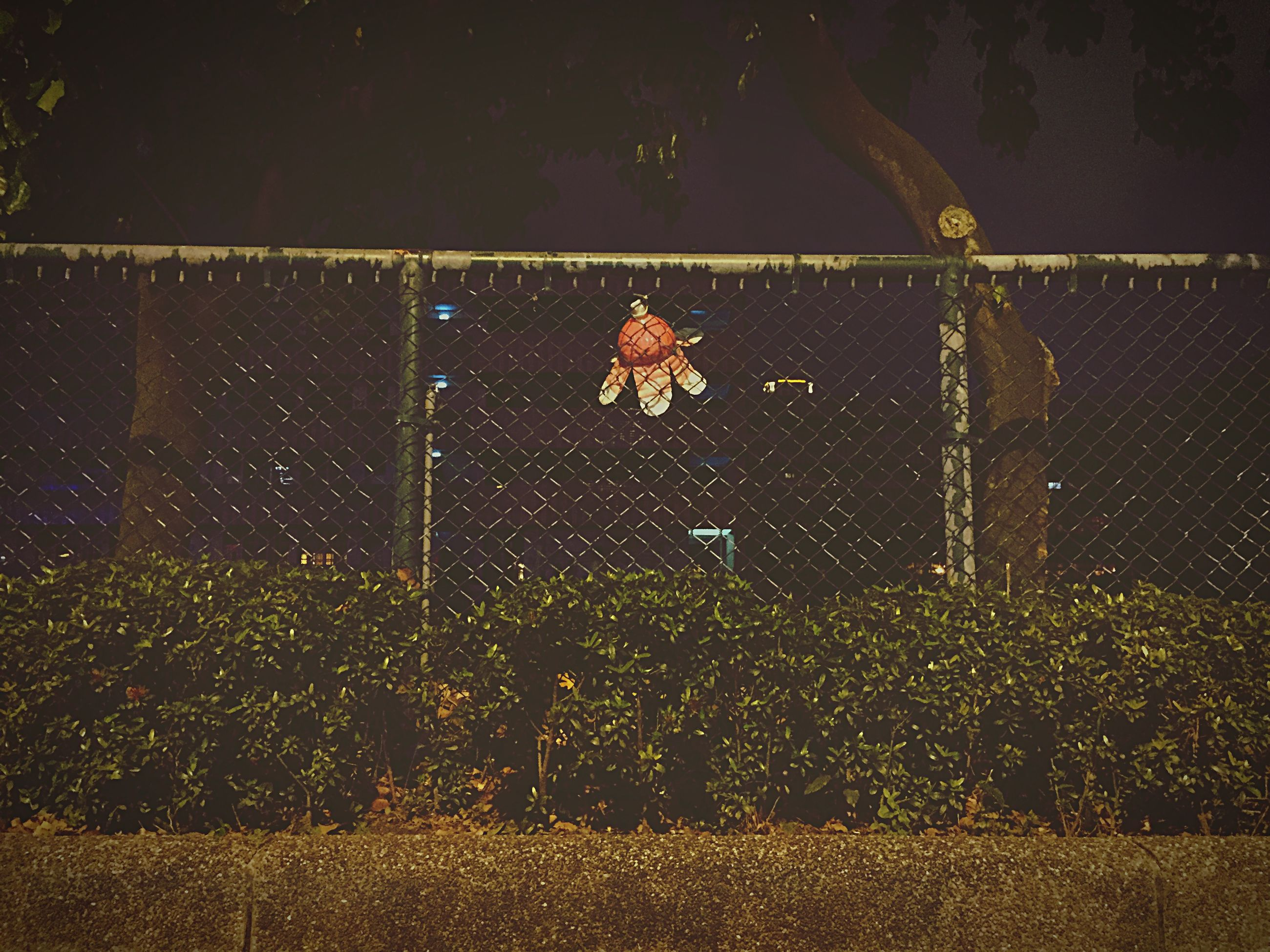 animal themes, night, fence, plant, nature, outdoors, one animal, protection, leaf, no people, dry, spider web, safety, chainlink fence, wall - building feature, field, autumn, growth, metal