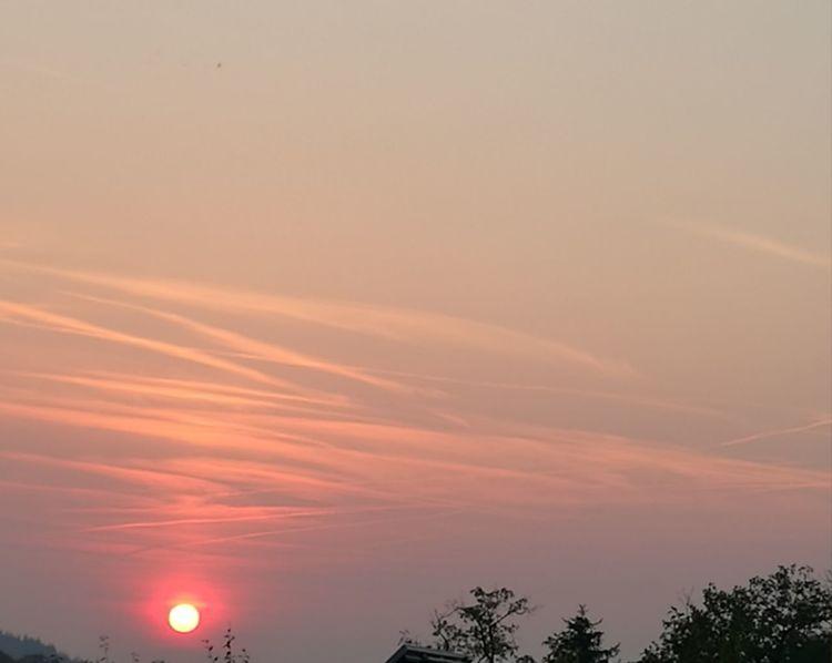 Tree Sunset Beauty Forest Fog Astronomy Sun Multi Colored Illuminated Summer