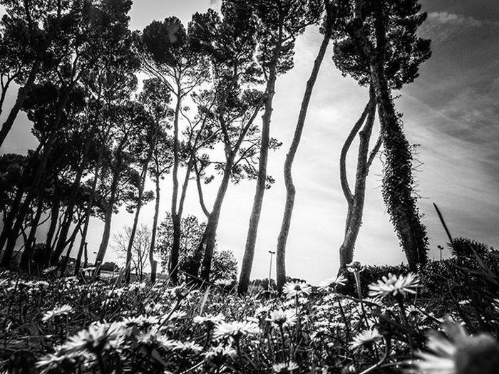 ✴ Black & White Style ✴ Blackandwhite Biancoenero Bnw Bw Livorno Toscana Spring Springtime Italia Ig_italy Ig_italia Ig_livorno Ig_toscana Ig_tuscany Igers Igerslivorno Igerstoscana Igersitalia BuonaNotte Goodnight Photooftheday Bestoftheday Nature Natureza