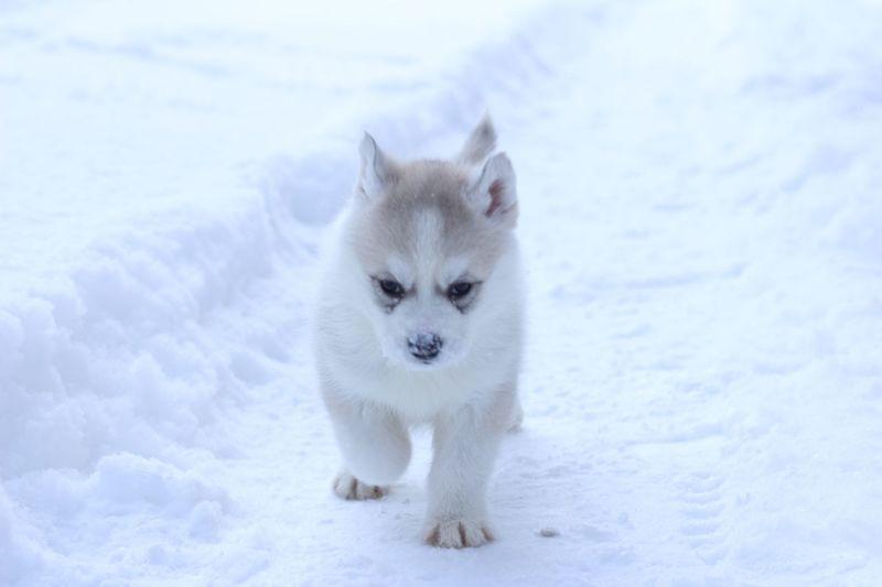 Portrait of white dog on snow