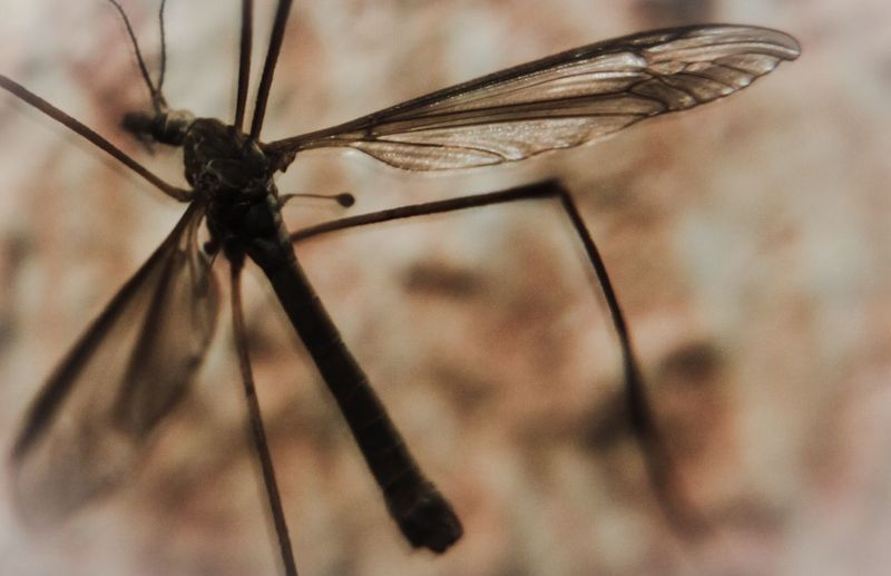 Wall Mayfly Insect Invertebrate Animal Wildlife Animal Themes Close-up Animal Animal Wing One Animal Animals In The Wild Focus On Foreground Nature No People Mosquito Dragonfly Animal Body Part Selective Focus Fly