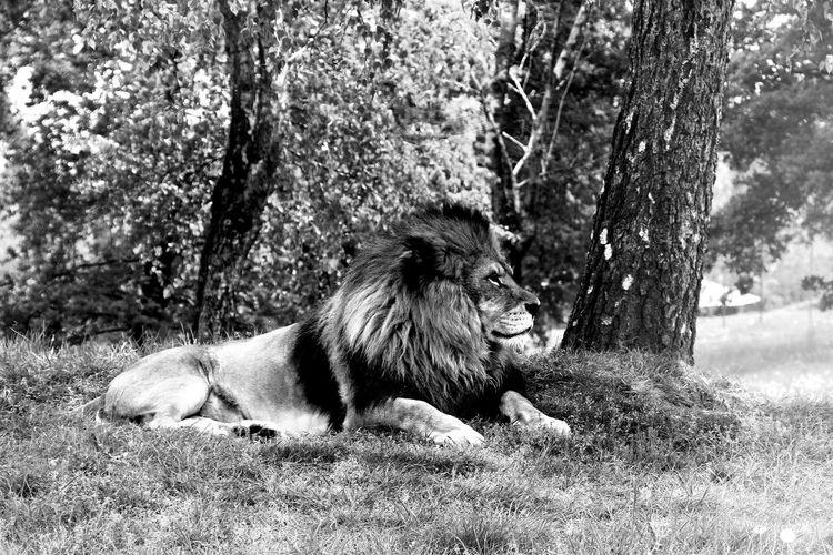 Lion EyeEm Best