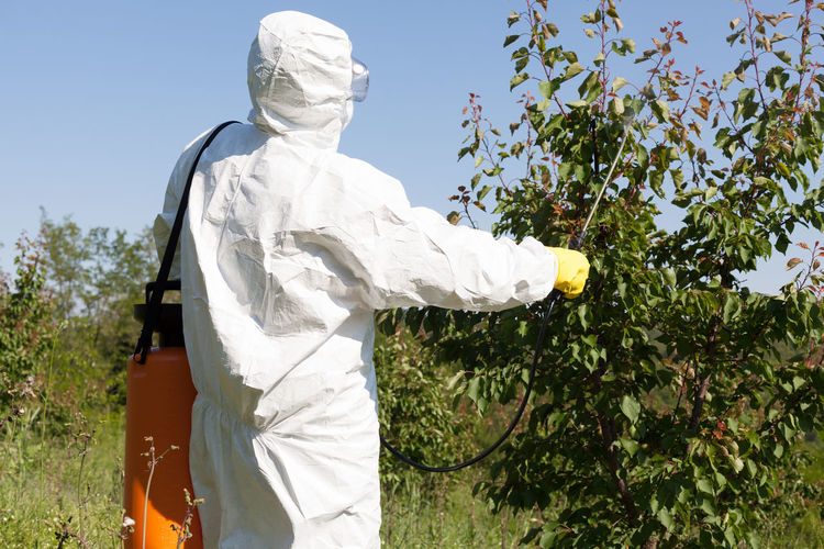 Rear view of male worker in protective workwear spraying insecticide on plants