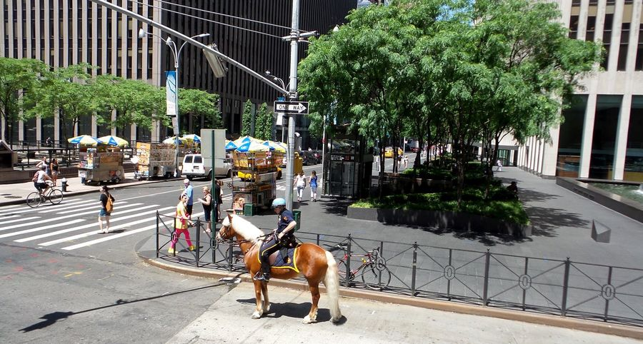 Adapted To The City Big City Living Big City Views City Lights City Police Horse And Police Men In <3 With The City Living In The City New York City New York City Horse And Police Man Streets Of New York City The Big City