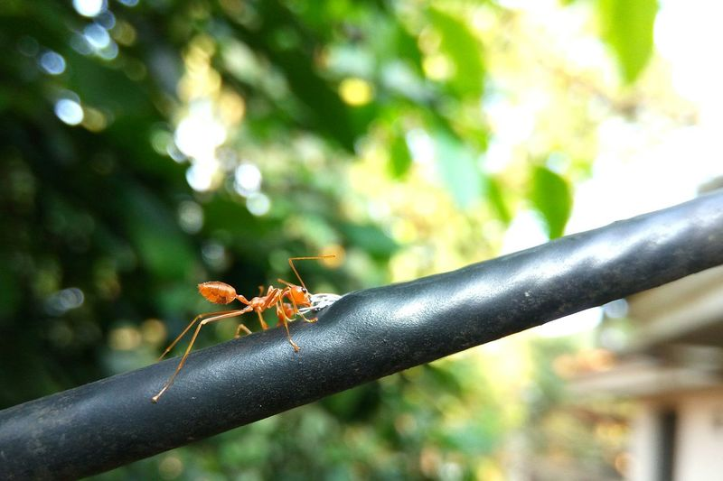 Close-Up Of Ant On Railing