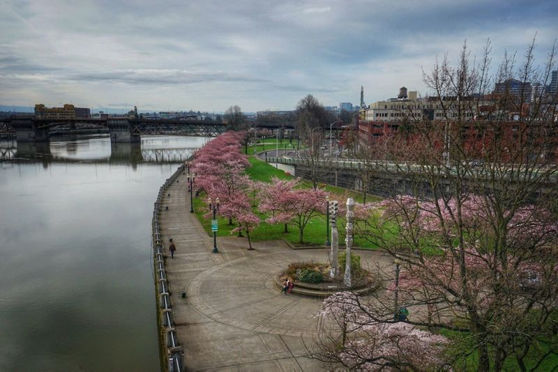 River Waterfront Pdx Nature Cherry Blossoms Springtime Portland, OR Cityscape