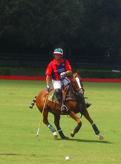 Action Action Shot  Action Sports Enjoyment Full Length Grass Green Color Helmet Horse Horses Lifestyles Playing Polo Polo Horse Polo Horses  Polo Player Skill  Sport