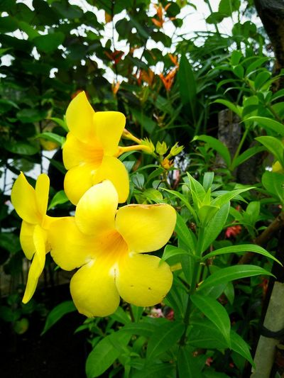Hello World Hanging Out Yellow Flowerporn Flowers Flower Photography Nature