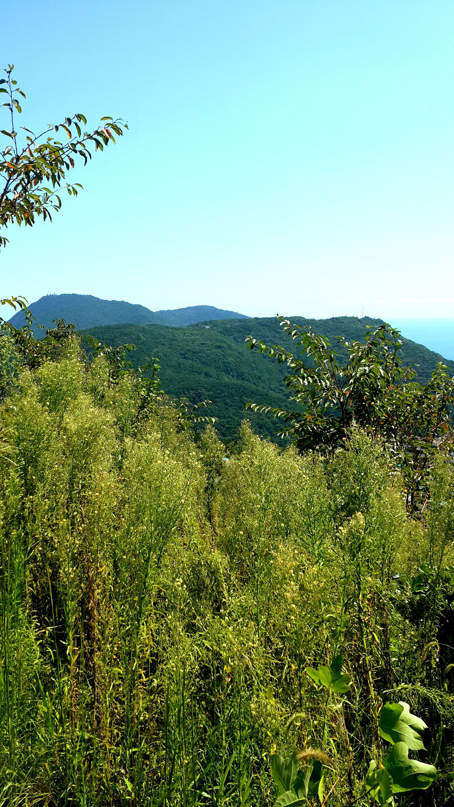 mountain, scenics, tranquil scene, tree, clear sky, green color, growth, landscape, beauty in nature, tranquility, plant, nature, blue, non-urban scene, lush foliage, green, branch, mountain range, day, outdoors, no people, remote, greenery, majestic, growing, valley, solitude