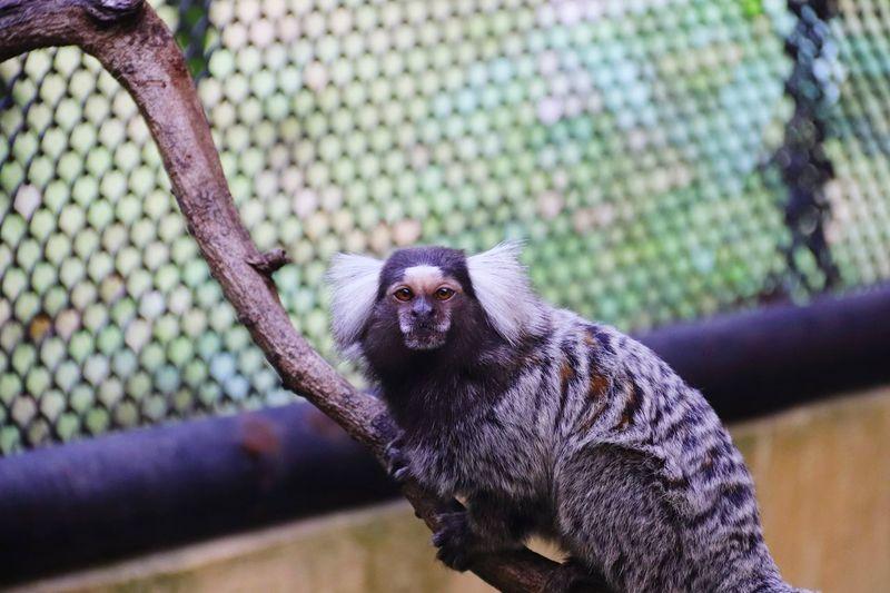 Portrait of monkey sitting on tree in zoo