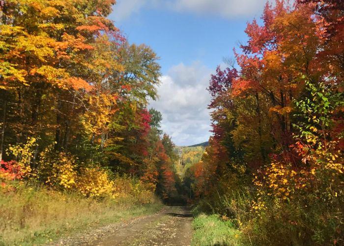 The path through autumn color. Autumn Change Tree Leaf Road Way Ahead Path Forward Orange Color Autumn Colors Autumn Leaves Scenics Sky Horizontal Fall Leaves Fall Colors Deciduous Tree
