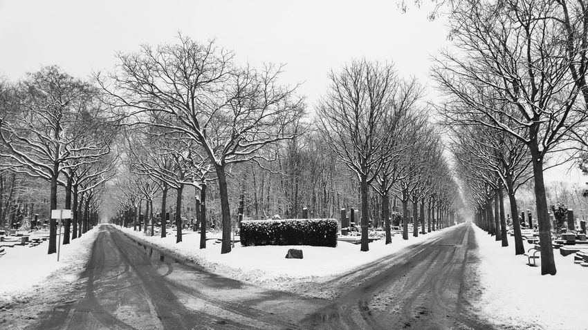 Complex decision-making Empty Road Junction Which Way? Cemetery Cemetery Photography Blackandwhite Bnw_collection Streetphotography Snow Nature_collection Snowy Trees Vienna Wien Streetphotography_bw Urbanexploring Snow Winter Cold Temperature The Way Forward Outdoors Road Day Tree Nature No People Sky Snowing