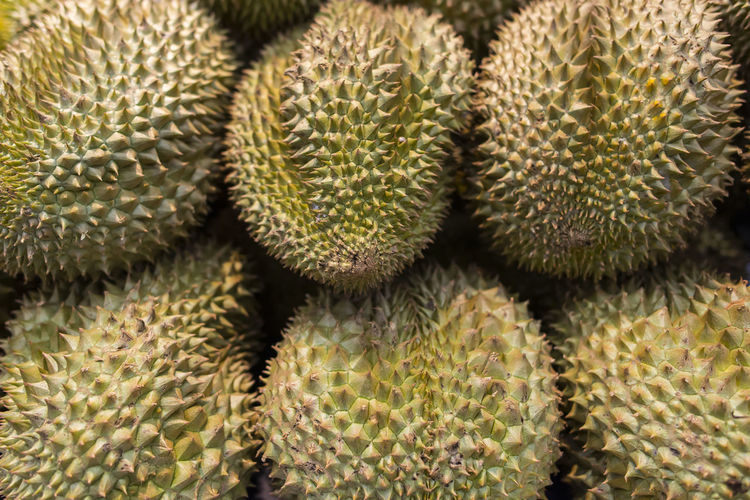 Durian Succulent Plant Spiked No People Full Frame Close-up Backgrounds Thorn Food And Drink Sharp Green Color Freshness Food Growth Healthy Eating Still Life Retail  High Angle View Wellbeing Outdoors Spiky Fruits Durian