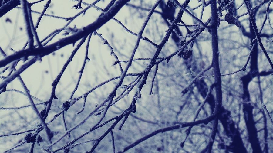 Bare Tree No People Outdoors Close-up Sky Full Frame Branch Tree Nature Abstract Photography Cold Temperature Snow Frozen Ephemeral Flowers,Plants & Garden Frost Backgrounds Macro_collection Macro Beauty Macro Photography Beauty In Nature Winter Abstract Nature Textures And Surfaces Low Angle View