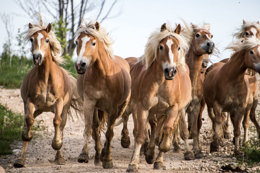 horse Animal Themes Day Domestic Animals Horse Livestock Mammal Nature No People Outdoors Standing Togetherness Tree