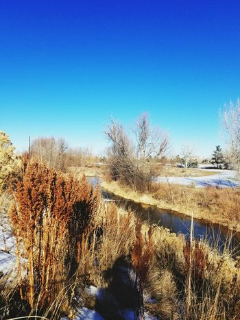 Spotted two hawks at cherry creek. Red Tailed Hawk Nature Sky Day Outdoors Landscape Water Riverside