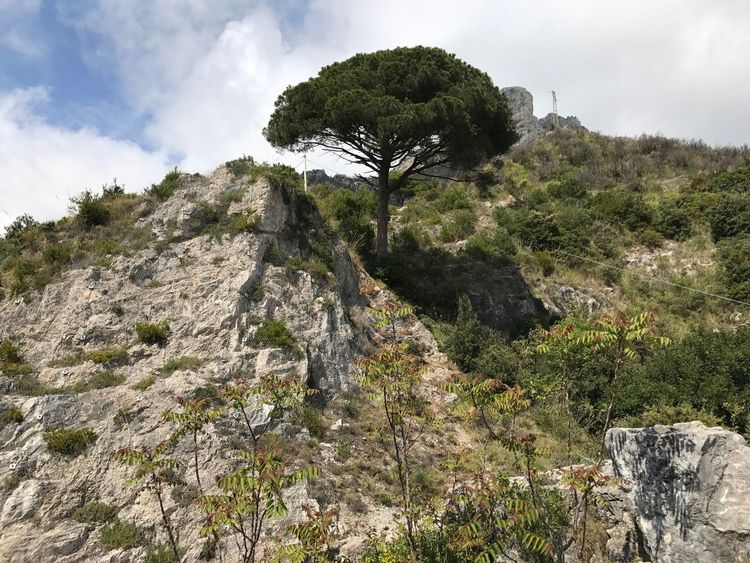 Tree Nature Landscape Rock - Object Sky Beauty In Nature No People Mountain Grass Outdoors Day Scenics