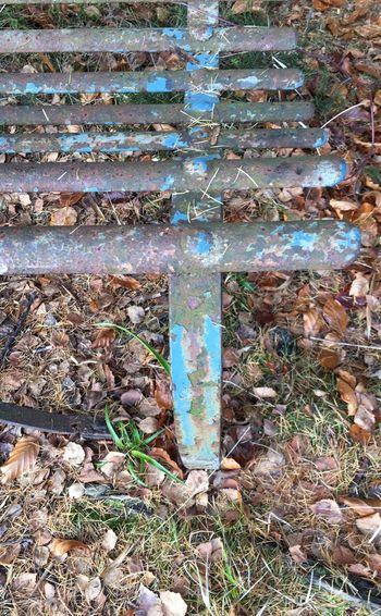 Bench Benches & Branches Aberdeenshire Aboyne