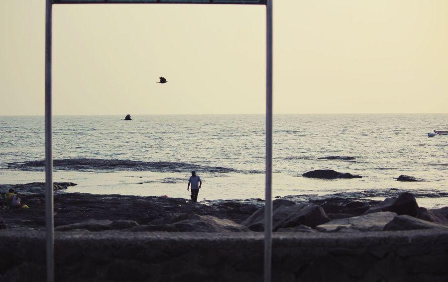 framed Sandy Beach Fun Leisure Outdoor Stroll Beaches Bird Water Beach Volleyball Sea Beach Wave Flying Sand Sunset Sport