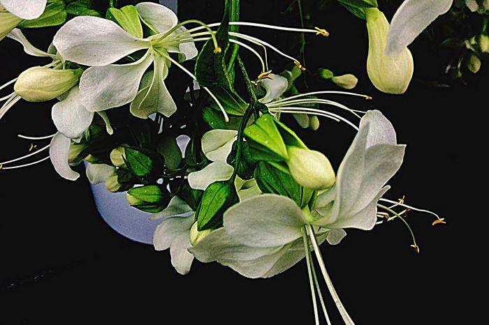 I Love Flovers Nature Flowers Beliebte Fotos
