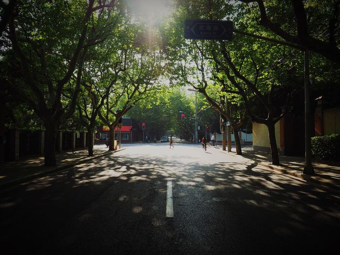 Road amidst trees in city