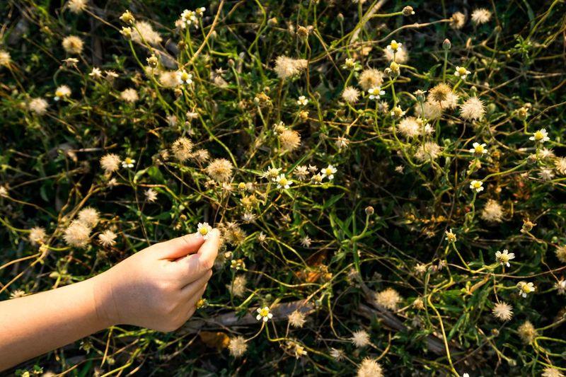 grass flower Flower Grass Human Hand Human Body Part Hand Plant One Person Growth Nature Field High Angle View Outdoors Sunlight