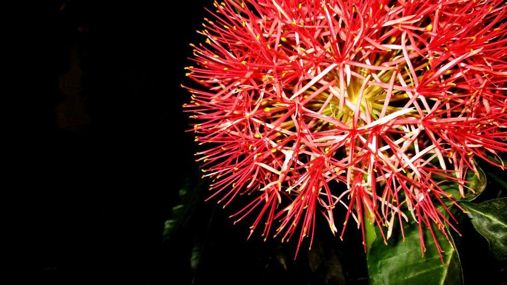 My new pic😊 Beautiful Flowers Closeup My Favorite Photo Macro Outdoors Garden Flower @sekharchinta , HyderabadIndia