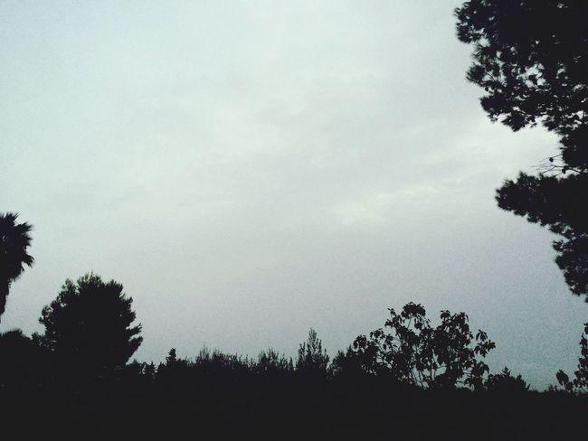 Campagna Sol #sun #cielo #sky #me #yo #azul #blusky Alberi Theendoftheworld
