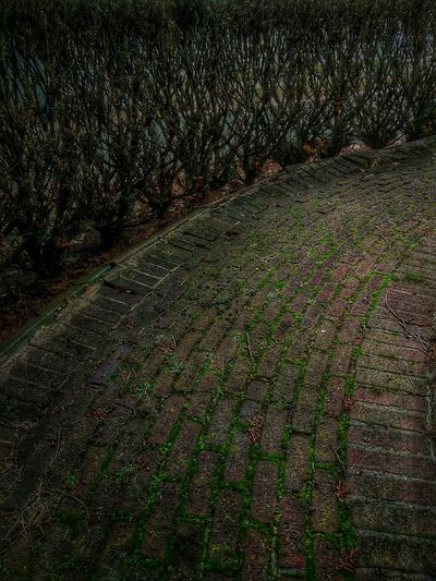 Path Passageway Bricks Moss Brick Patio