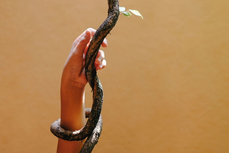 Close-up of hand holding stick against wall