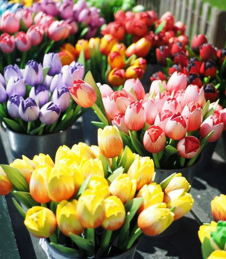 Beauty In Nature Craft Crafts Flower Flower Head Flower Shop Freshness Holiday Nature Netherlands No People Outdoors Petal Plant Tulip Wooden Floor Wooden Flower Wooden Flowerbed